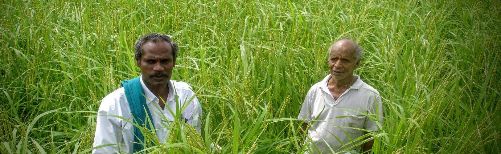 SVR-Nel-Jayaraman@SVR-Organic-Way-Farm