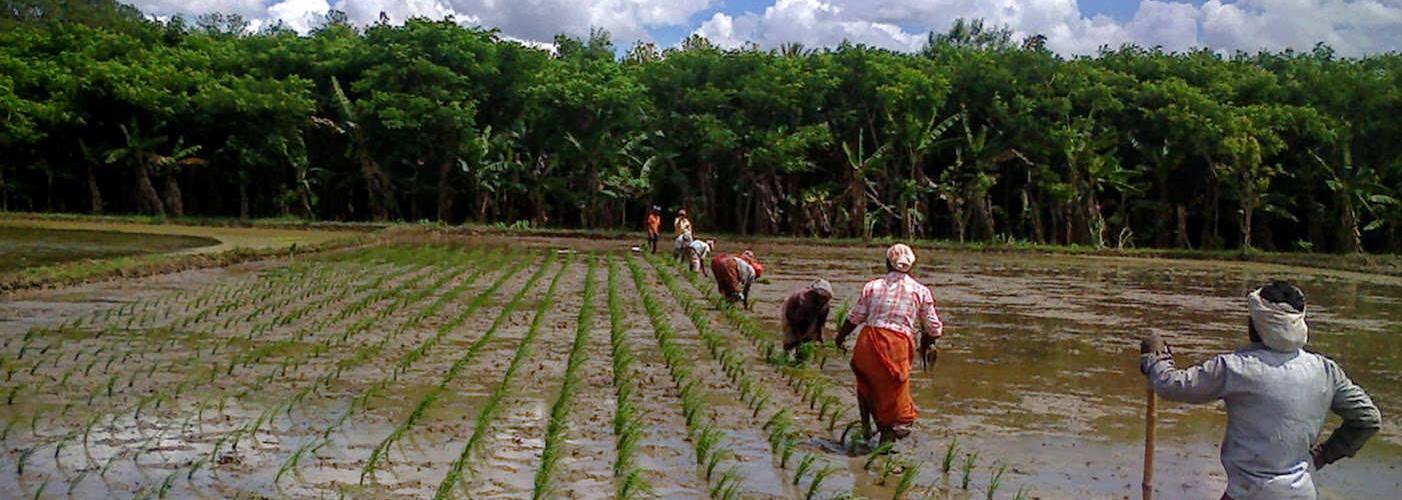 Organic Farmer's Training Program at SVR Organic Way Farm
