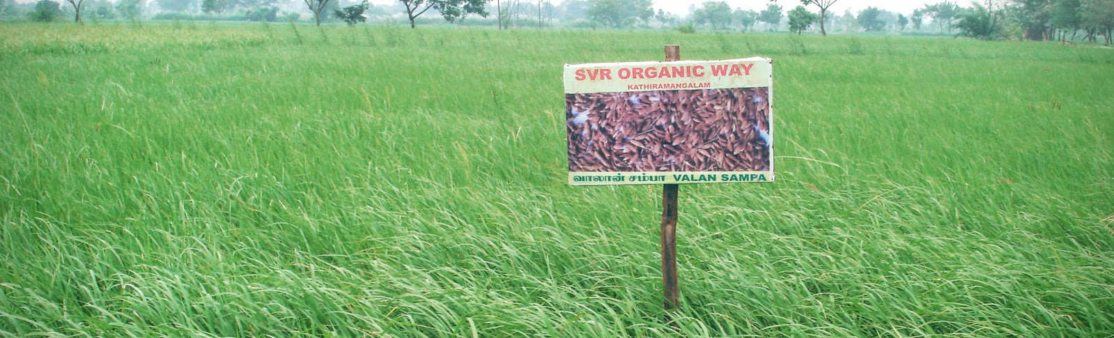 Banner Photo of SVR Organic Way Farm